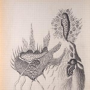 Devenir-espèces(s) - 14